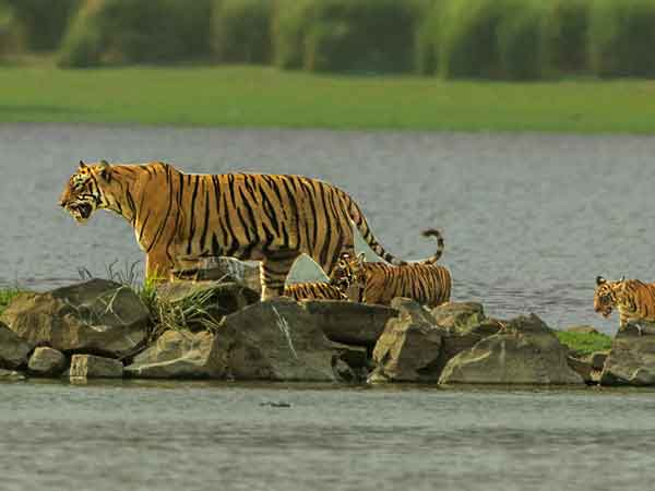 wildlife sanctuaries india