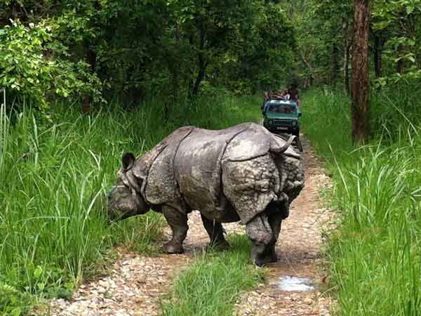 INDIA NEPAL WILDLIFE TOUR